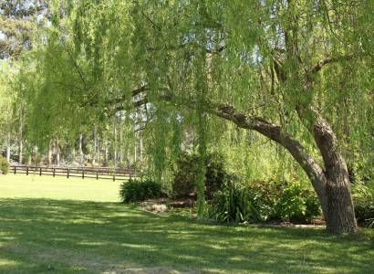 Equestrian Wonderland! Incredible Abundance of Spring Water