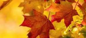 Autumn Market Update