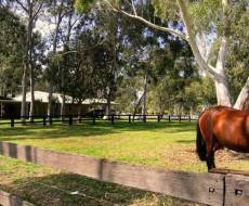 Darling Downs & Oakford Market Update