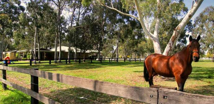 Darling Downs and Oakford Market Update - August Edition