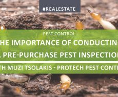The Importance of Conducting a Pest Inspection Before Purchasing Property